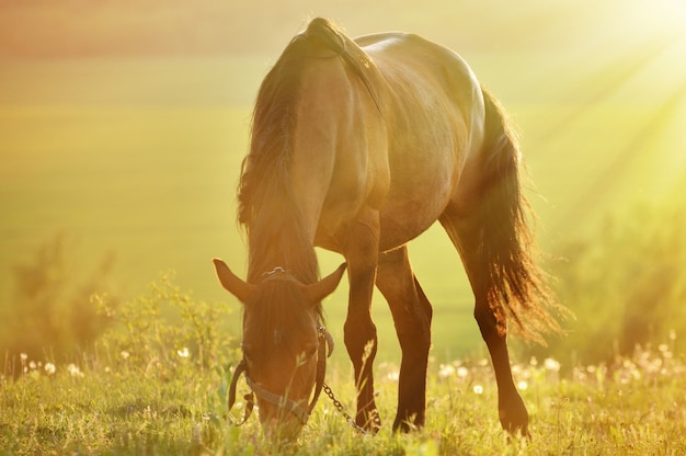 Photo horses close-up in backlighting