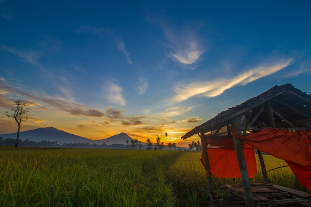 A photo of the hut in the middle of the rice field