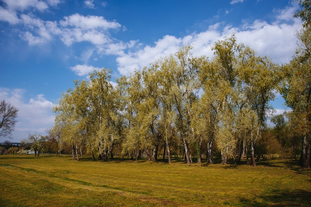 Photo of a little filed in park, beautiful nature, nobody