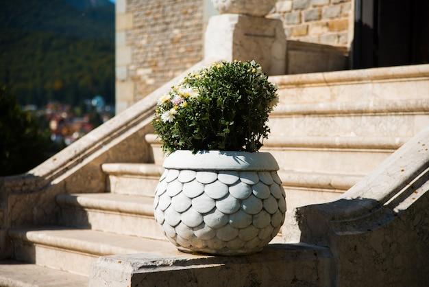 草花の古い階段にある美しい石造りの花瓶の写真