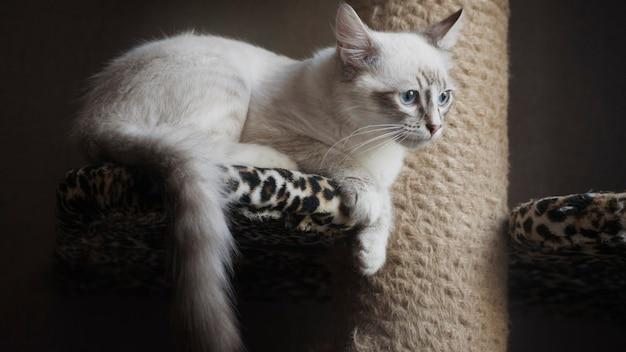 スクラッチポストに横たわっている謎の美しい猫の写真。
