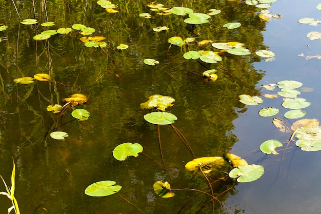 クローズアップした小さな湖の写真