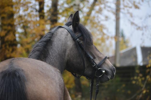 秋の美しい優雅な馬の写真