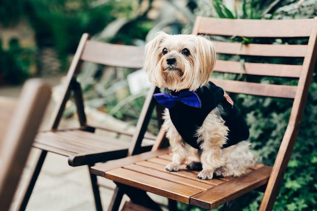 Фото красивой пушистой собаки в праздничной одежде с бабочкой