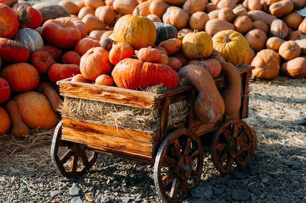 晴れた秋の日の屋外農家の地元の市場での美しいカボチャの写真。