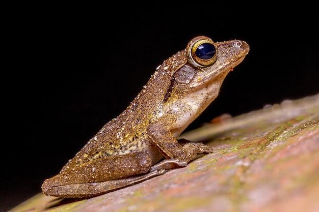 緑の苔に茶色のカエルの写真