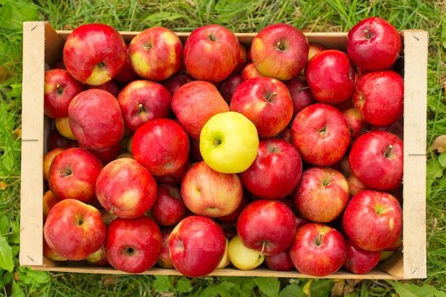 햇빛 빛에 잔디에 나무 상자에 갓 고른 된 빨간 사과 사진.