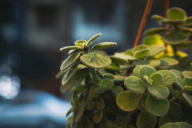 Фото зеленого цветка справа в красивом магазине
