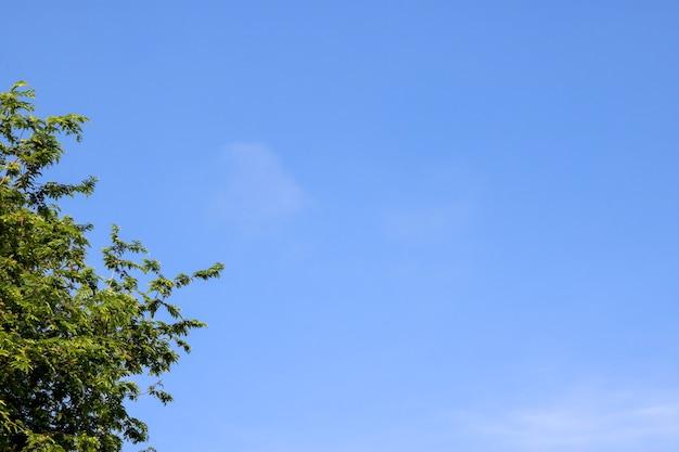 Фотография зеленый отпуск на ясном голубом небе для фоновой текстуры