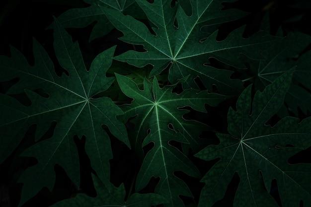 Фото листьев для фона или других целей.