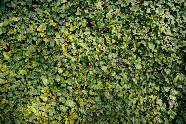 O 녹색 브러시, 작은 잎, 신선한 식물의 사진