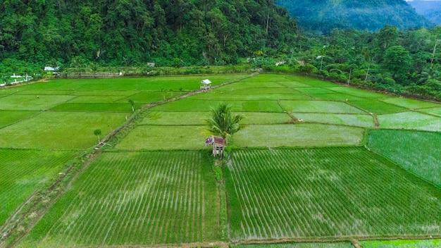 Фото пейзажей рисовых полей в деревне брайен, район ачех бесар, ачех, индонезия