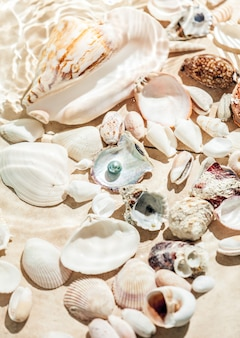 海底に横たわる貝殻と黒真珠の写真