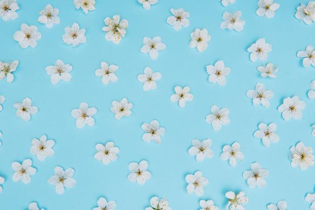 푸른 표면에 봄 하얀 벚꽃 나무의 사진