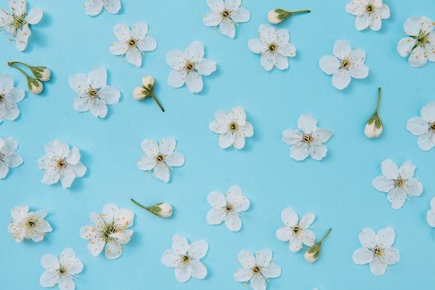 Фотография весеннего белого вишневого дерева на синей поверхности