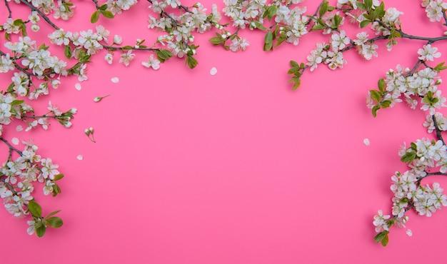 파스텔 핑크 표면에 봄 하얀 벚꽃 나무의 사진