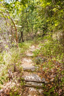 Фото лестниц и переходов на природе