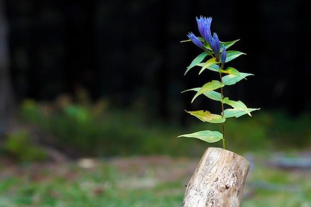 ぼやけた暗い自然の中で抽象的なスタブの写真。古い木の切り株。花がついた枯れた死体。新しい人生の始まり。
