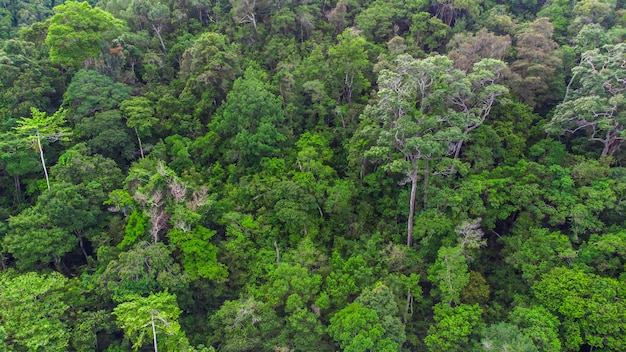Фотография красоты леса на вершине geurutee aceh jaya regency aceh indonesia