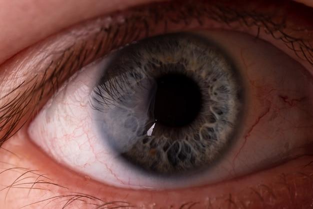 目のマクロの写真