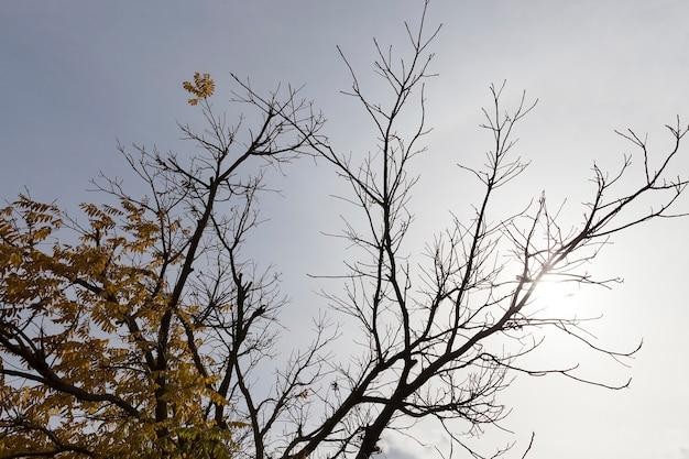 가을 가을 가을 시즌의 나무 사진