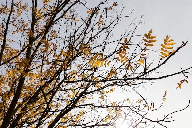 가을 가을 동안 가을 시즌에 나무의 사진.