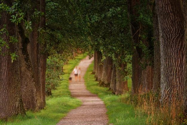 緑の葉の木の横を歩いている二人の写真