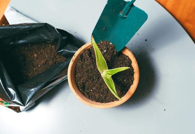 小さな植物が入った鍋に地面を置いている女性の写真