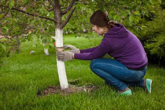 나무 껍질을 치료하기 위해 나무 주위에 밴드를 묶는 여자의 사진