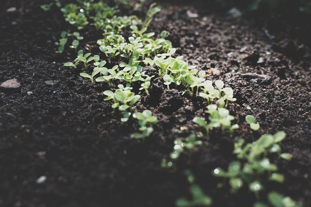 地面の庭の若い芽の写真。春に野菜を植える