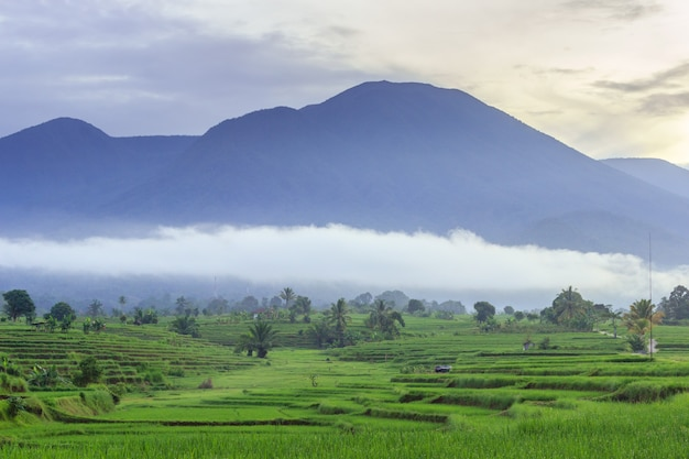 Photo of original natural scenery of rice fields and blurry blue mountains and morning mist clouds in bengkulu utara, indonesia