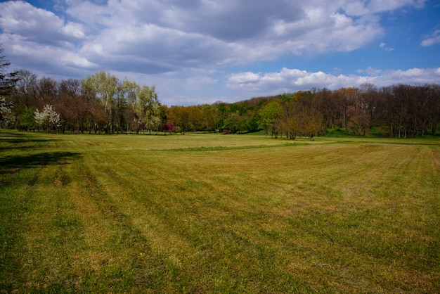 Photo of a park with little field, beautiful sunny spring day
