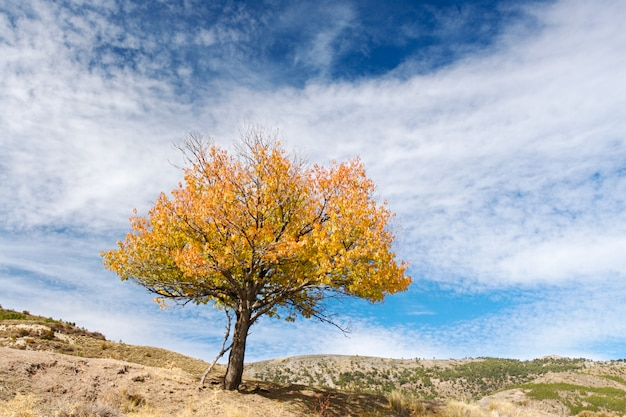 Photo of a solitary tree because of the drought