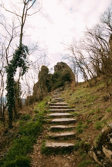 Photo of some stairs going to a big mountain rock with some spring plants and fresh green grass.