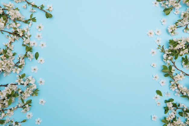 Photo of spring white cherry blossom tree on blue surface