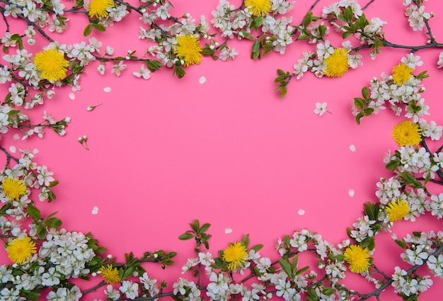 Photo of spring white cherry blossom tree on pastel pink surface