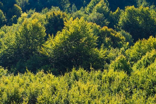 Фото текстура зеленой листвы