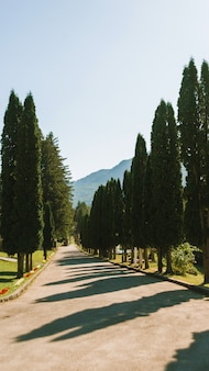 Photo of vineyard or cpuntry house with trees in mountains