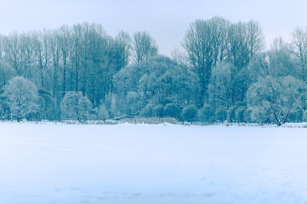 Photo of winter landscape, trees in day