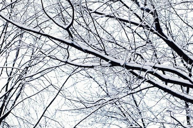 Photo of winter landscape