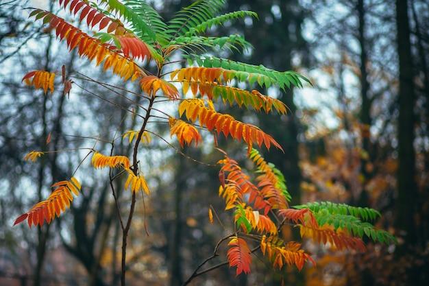 Фото с крупным планом красных, желтых и зеленых осенних листьев