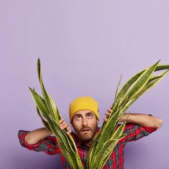 Foto di un uomo con la barba lunga meravigliato si trova vicino alla pianta di sansieveria, guarda in alto, indossa un cappello giallo e una camicia a scacchi, si preoccupa delle piante da appartamento