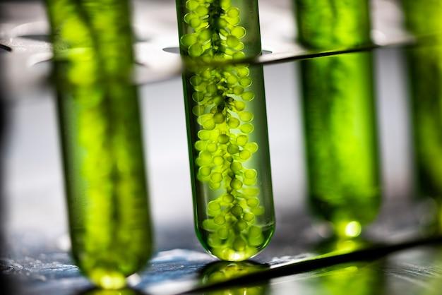 Фотобиореактор в лабораторной биотопливной промышленности водорослей, топливо из водорослей, исследования водорослей в промышленных лабораториях