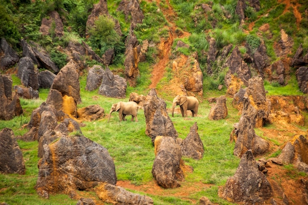 Photograph of african elephants. loxodonta africana in cabarceno natural park in cantabria