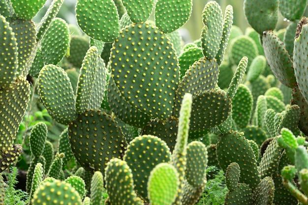 Photograph of a cactus garden.