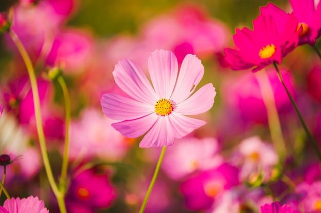 日没時の庭の花の写真