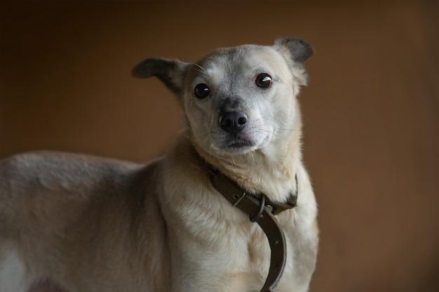 面白いあくび犬の写真