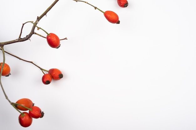 Photograph of red rose hips on a white background dog roses isolated on white background