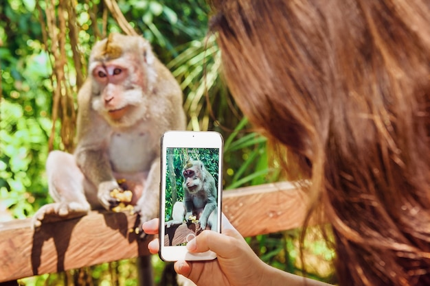 Photograph with narrow focus on woman hand with smartphone taking mobile photo and video of monkey for sharing in social network. travel lifestyle and people outdoor activity on bali island vacation.
