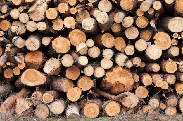Photographed close up felled trees, put together during logging